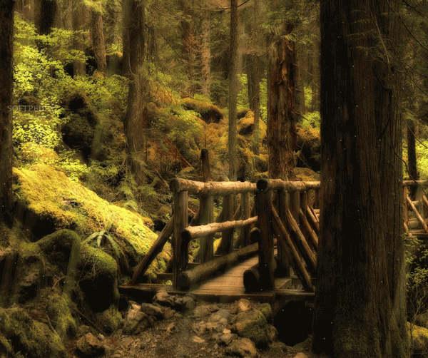 Forest Bridge Animated Wallpaper Crack + Keygen Download