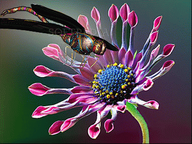 Jeweled Dragonfly 3D Screensaver Crack Plus Serial Key