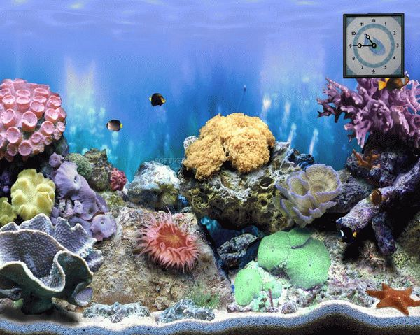 The Big Corals - Animated Screensaver Activator Full Version